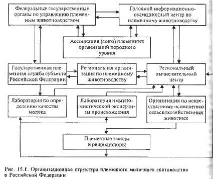 Структура государственной
