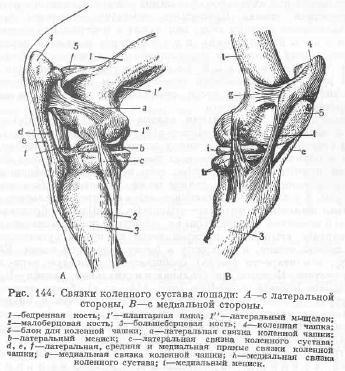 Суставы и связки грудной конечности как получить 3 группу при артрозе коленного сустава
