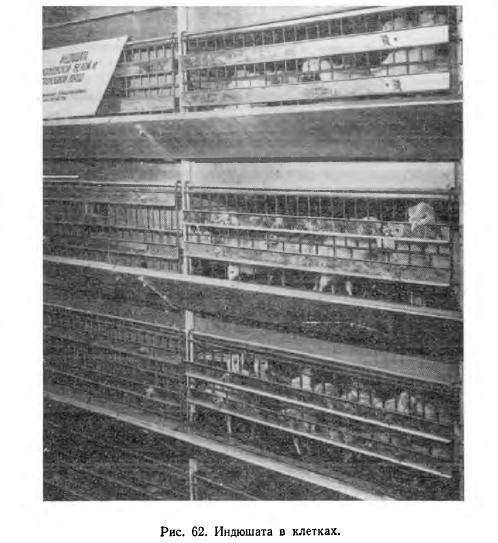 Производство мяса индеек