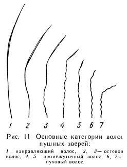 Строение остевых волос